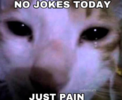 no cats only pain.png